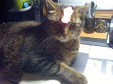 Post-it cat.