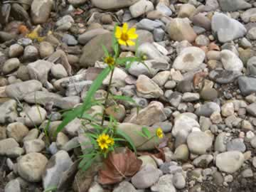 God's AMEN: Flowers in unlikely places>