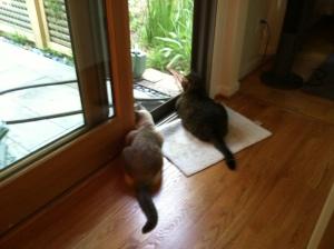 Tiria and Henry, Back Yard Sentinels