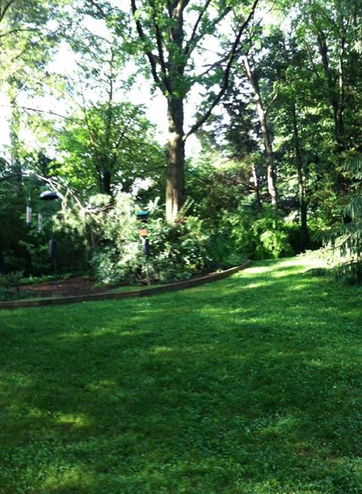 The backyard in summer - lots of green, lots of rain!