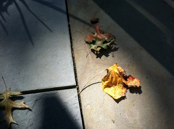 Wednesday was a 90 degree day with leaves falling from the trees. How random is that?