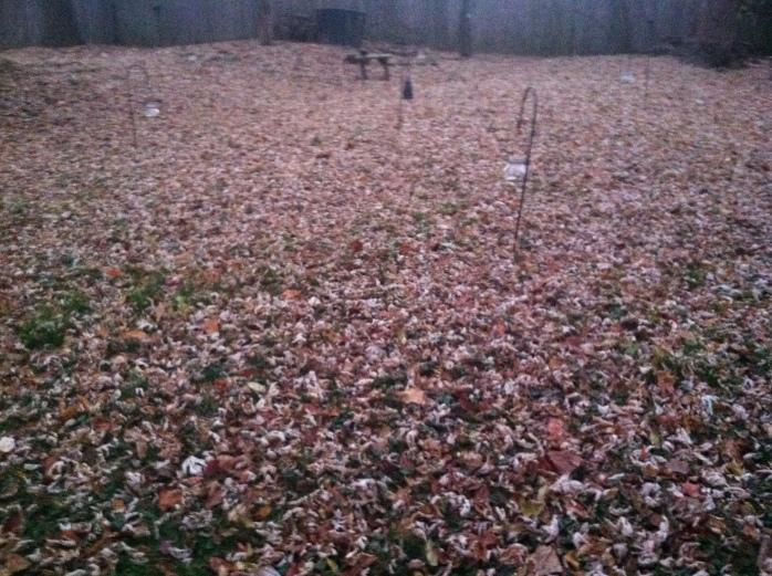 The Fall Labyrinth