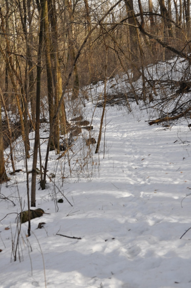 2014-02-22 trail
