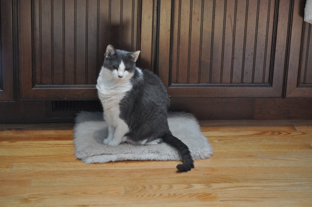 The toasty spot - right in front of a heater vent in the kitchen!