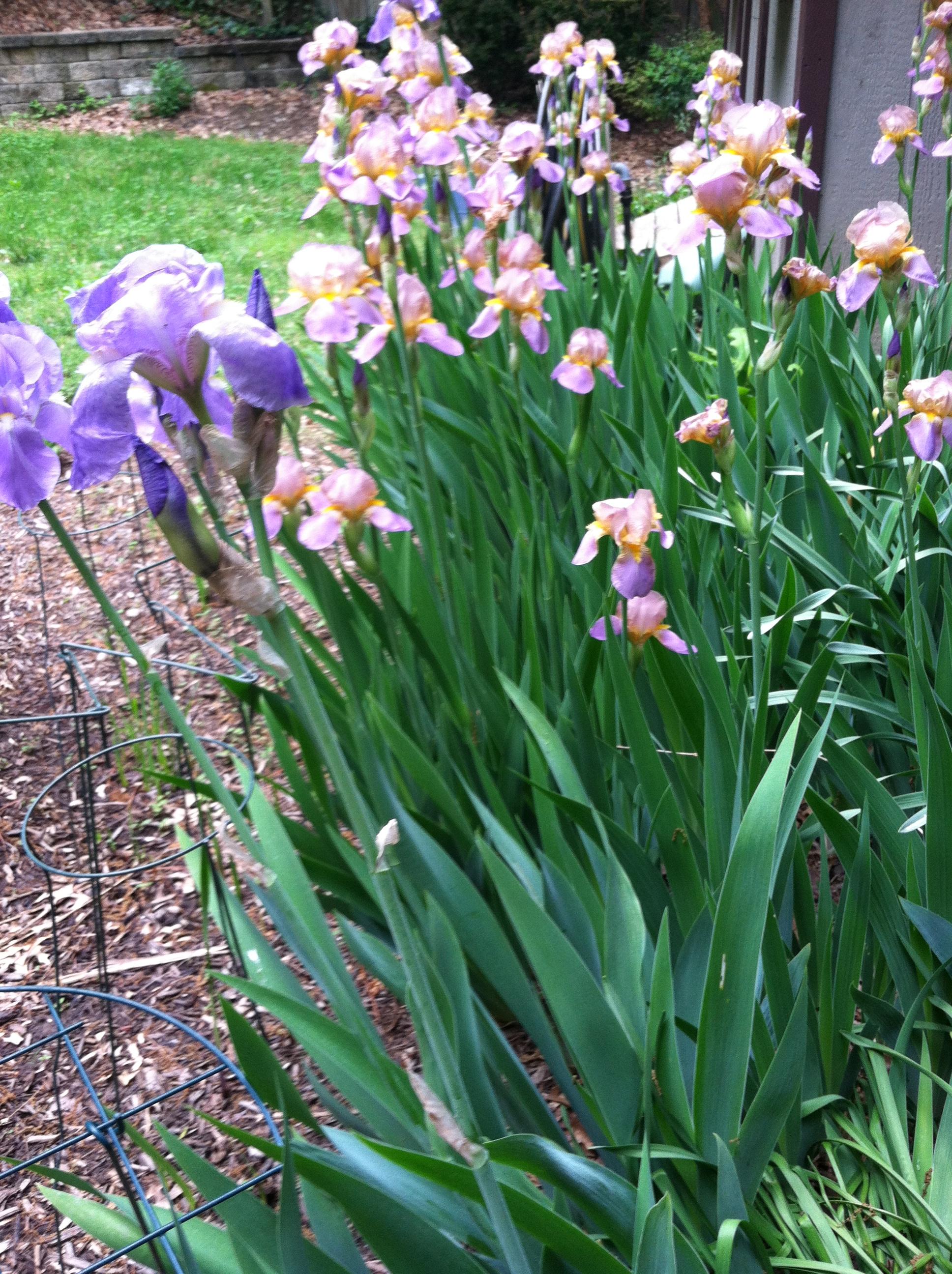 Flower Garden Ideas Zone 5 Woodguides