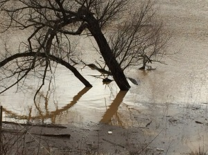 Flood zone. Lake Needwood. Photo credit: Rev. Deb Vaughn