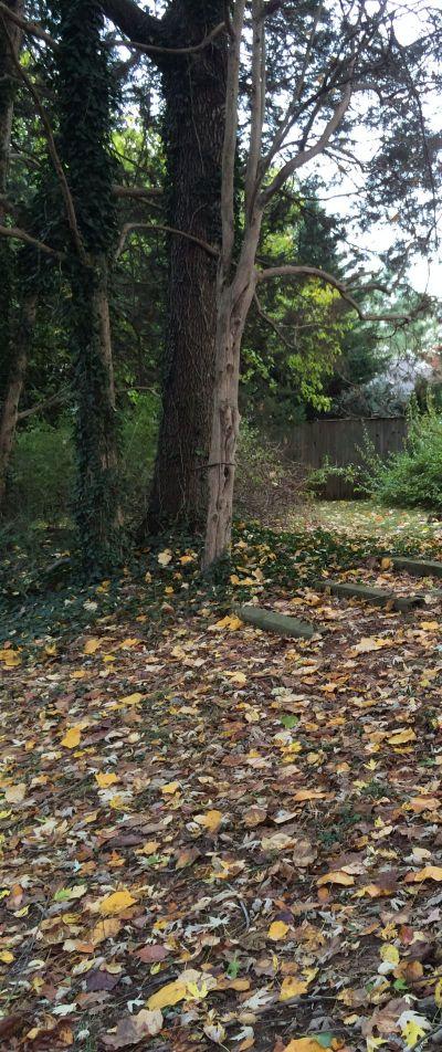 leaftreeyard