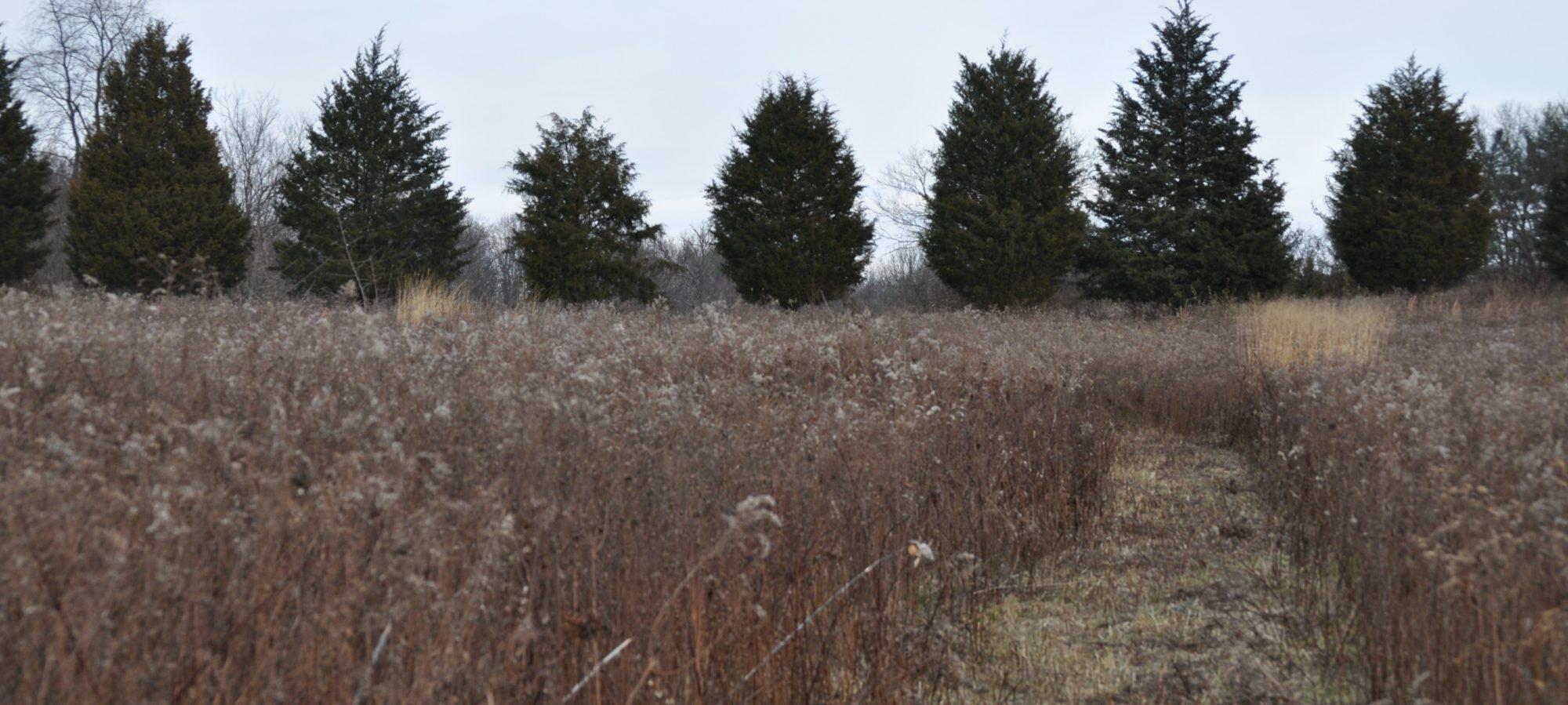 photo of trees in a winter field (c) Rev. Deb Vaughn