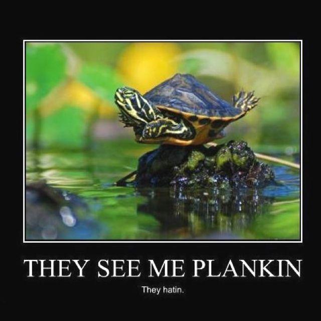 turtleplanking