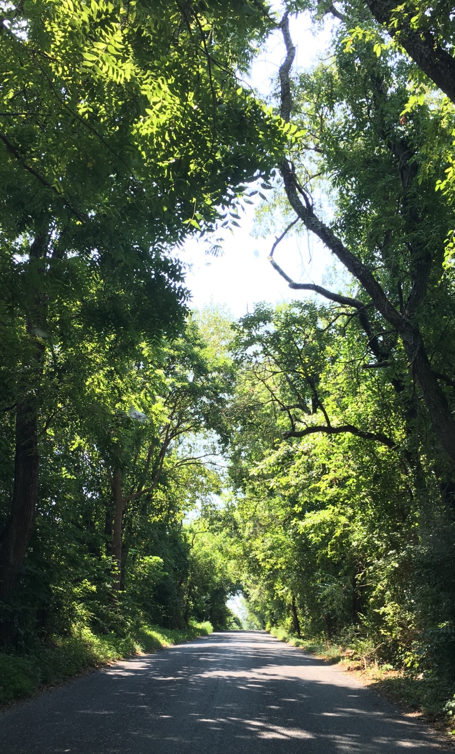Looking down a country road, bordered by trees.